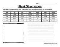 plant observation worksheet worksheets teaching ideas