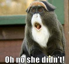 Monkey Face Meme - 1000 images about animals on pinterest fat cats animal