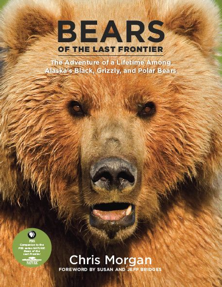 picture books about bears projects chris wildlife