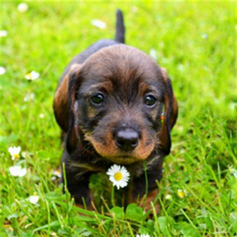 how to care for a new puppy complete new puppy checklist