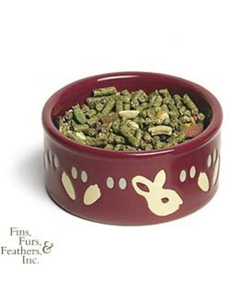 care for goldfish in ceramic bowls 65 best images about ideas for the pet room furniture and