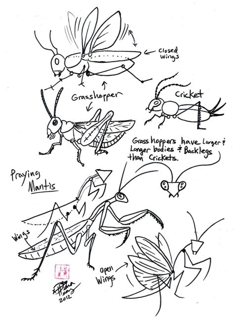 I M Drawing A Blank by Draw Grasshopper Cricket And Praying Mantis By Diana