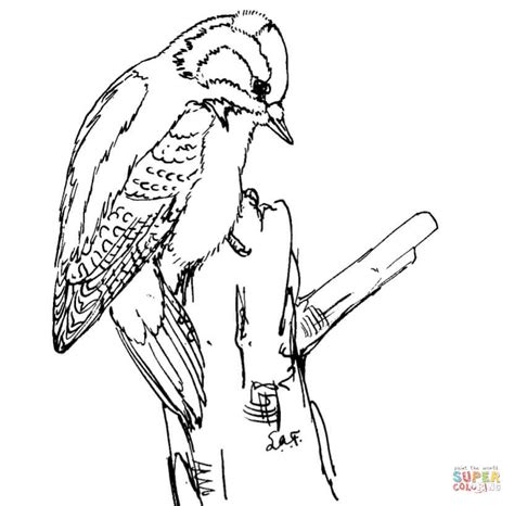 downy woodpecker coloring page free printable coloring pages