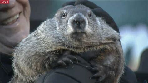 groundhog day update groundhog day update 28 images it science news