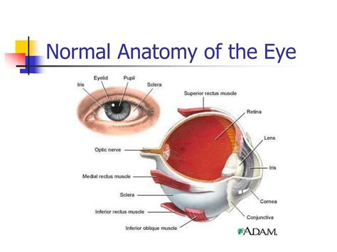 basic structures of the eye ppt download ppt eye and ear assessment powerpoint presentation id 399314