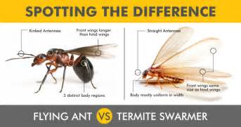 flying ants vs termite swarmers spotting the difference
