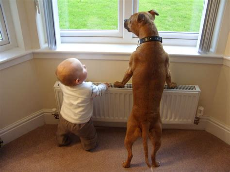 best dogs for babies guest post dogs babies the best introduction this mummy