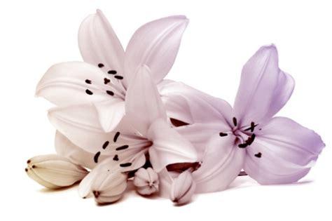 garni dei fiori madonna di ciglio giglio