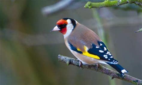 bird for the garden garden birds uk animal