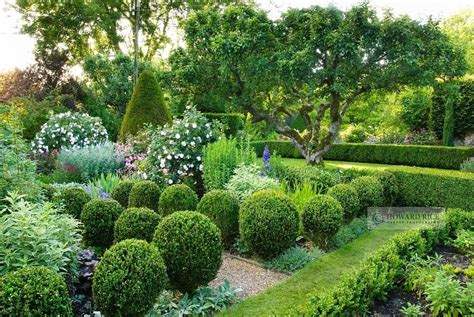 formal garden formal garden with clipped box balls gravel paths roses