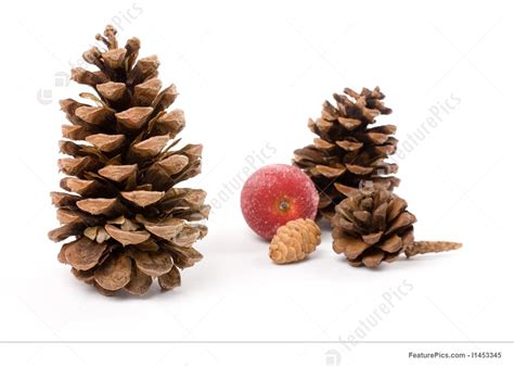 pine tree fruit pictures image of pine cone and sugared fruit