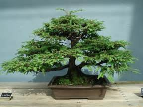 bonsai tree home garden and landscaping outdoor bonsai trees