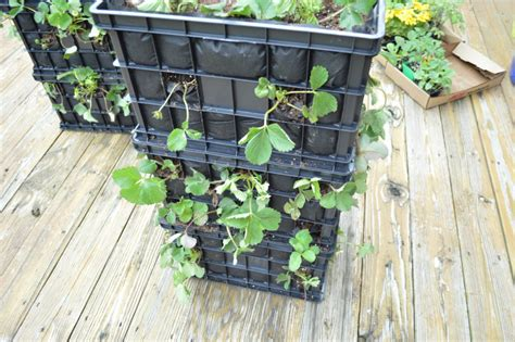 Pvc Strawberry Planter by Diy Strawberry Tower From The Office Store Loving Here
