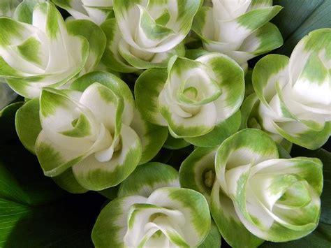 fiore curcuma fiori freschi decimomannu consorzio sardaflora