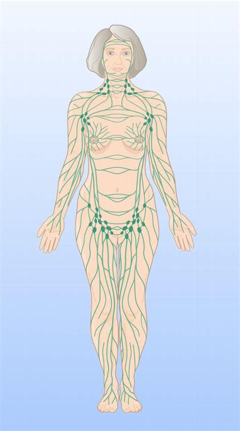 wo liegen die lymphknoten ursachen leisternschmerzen lymphknotenschwellung