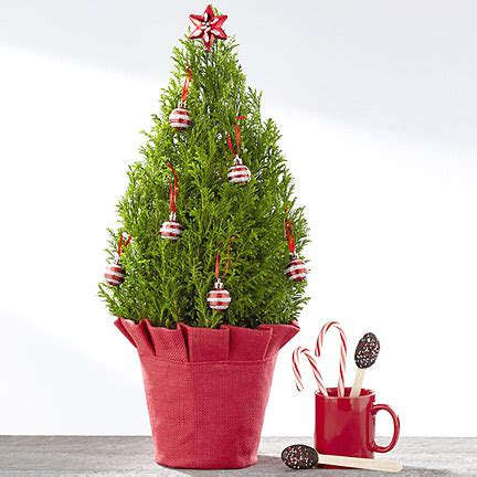 miniature christmas tree next day delivery