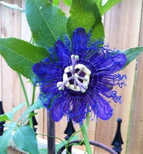 imagenes de flores asombrosas la orqu 237 dea y sus asombrosas formas plantas
