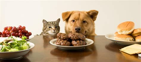 is it ok for dogs to eat cat food is it safe to give my table scraps pawstruck press