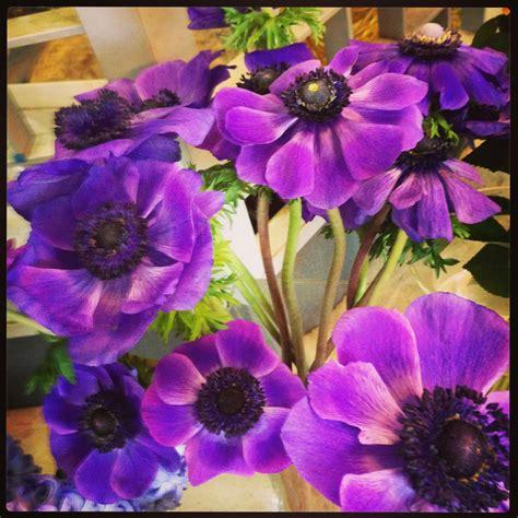 quali sono i fiori di primavera quali sono i fiori della primavera