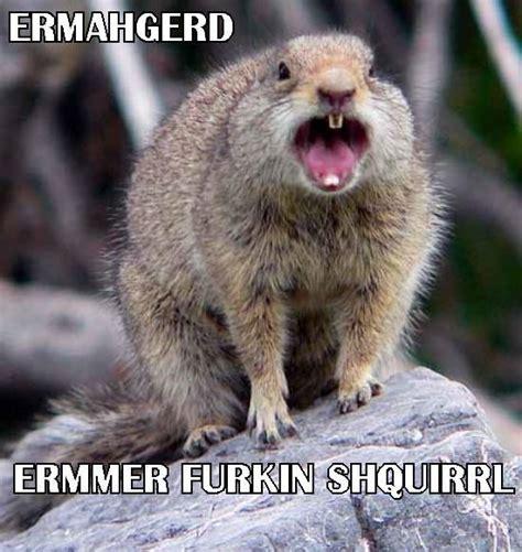 Ermahgerd Animal Memes - pin by stefanie roberts on ermahgerd pinterest