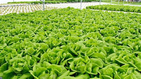 hydroponic gardening guide advantages  hydroponic