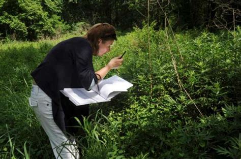Environmental Analyst by Weevils Progress Against Invasive Vines In Greenwich Connecticut Post