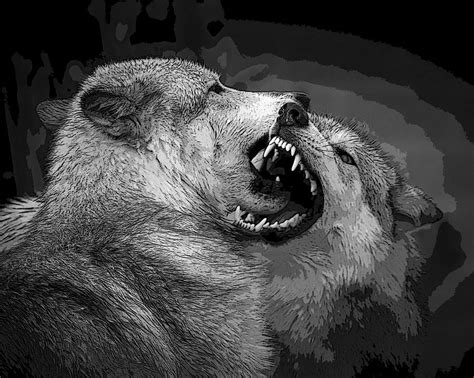 black and white wolf wallpaper black and white wolf 8 cool hd wallpaper