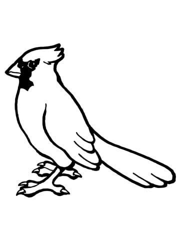 indiana state bird coloring page cardinal bird outline