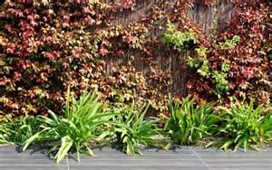 dise 241 o de jardines fotos antes y despu 233 s la plantas jardn plantas y jardin arte y jardiner 205 a