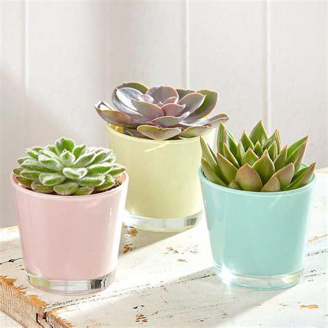 cute succulent pots 25 best ideas about pastel room on pinterest pastel
