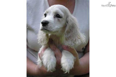 calm puppy breeds calm breeds breeds picture