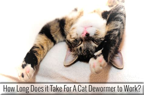 how does it take to deworm a puppy how does it take for a cat dewormer to work entirelypets
