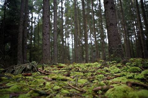 woodland forest plants and trees temperate deciduous forest thinglink