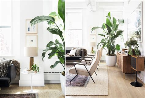 shady indoor garden ideas  loft apartment home design