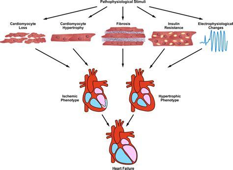 Remodeling Programs pathological ventricular remodeling circulation