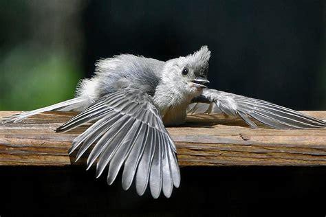 sunning understanding bird behavior