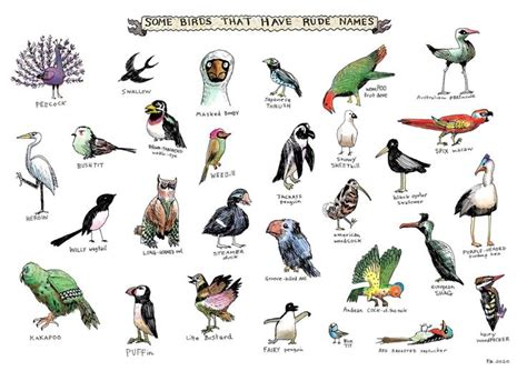 birds pictures with names 28737showing jpg fauna