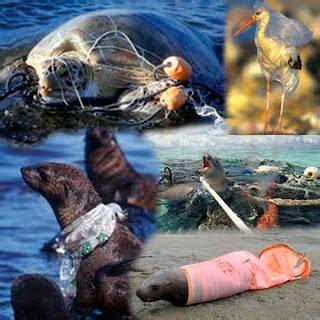191 qu 233 ocurre con los animales marinos cuando lanzamos basura al oc 233 ano paperblog