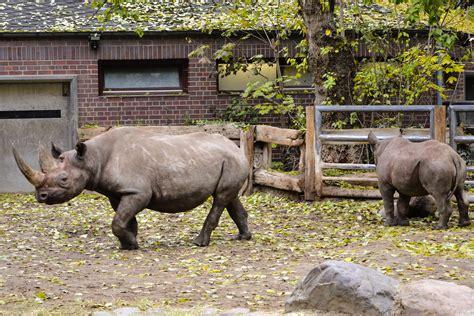 Zoologischer Garten Hardenbergplatz 8 by Bezoek De Berlijnse Dierentuin Zoologischer Garten