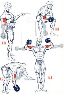 exercices biceps musculation forum forme sport
