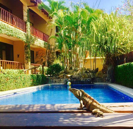 backyard hotel playa hermosa backyard hotel updated 2017 prices reviews costa rica