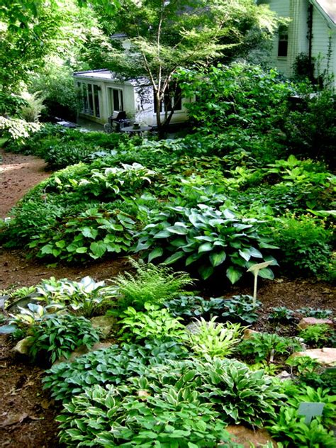Miniature Rock Garden Hosta Carolyn S Shade Gardens
