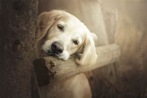 puppy photography heartwarming portraits by 19 year photographer bored panda