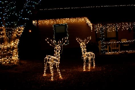 outdoor deer christmas lights decorations