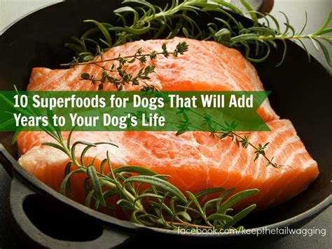 superfoods for dogs superfoods for dogs keep the wagging