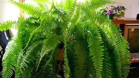Zimmerpflanzen Die Luft Reinigen by 9 Zimmerpflanzen Welche Die Luft Reinigen Und Fast