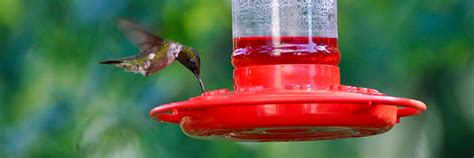hummingbird feeder how to gill landscape nursery
