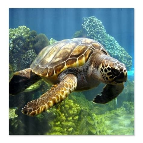 sea turtle bathroom sea turtle shower curtain bathroom remodel pinterest