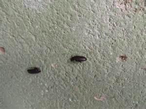 Interieur Gestaltung Wohung Klein Bilder Schwarze K 228 Fer In Der Wohnung Wer Kennt Sie Insekten