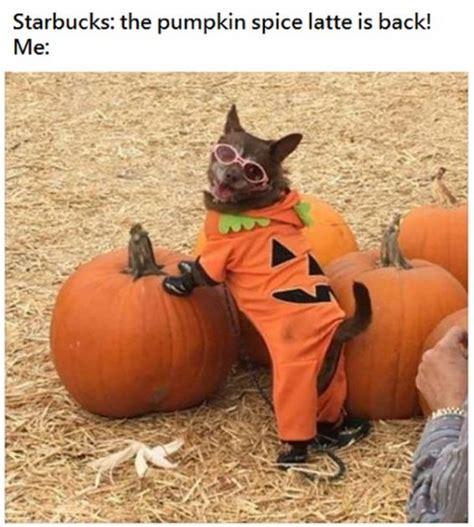 pumpkin meme 18 pumpkin spice latte memes